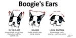 BoogieEars