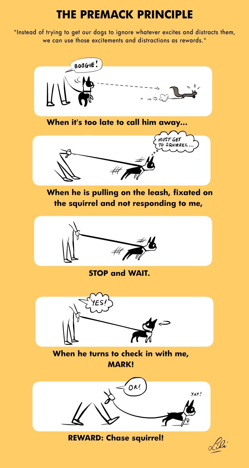 The Smallest Behaviors Boogie Squirrels Boogies Blog