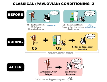 pavlov-leash-lilichin
